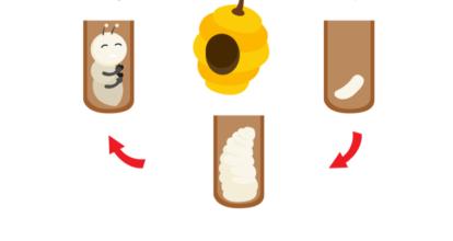 蜂のサイクル