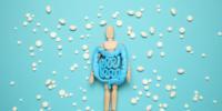 乳酸菌と模型